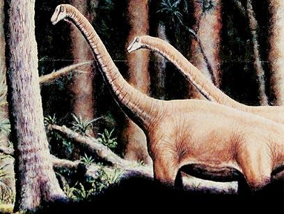 אסטרואיד ענק הכחיד את הדינוזאורים (צילום: רויטרס)