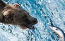 דוב. צילום: ויז'ואל/פוטוס
