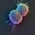 תאי גזע עובריים