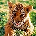 צילום: WWF-Canon