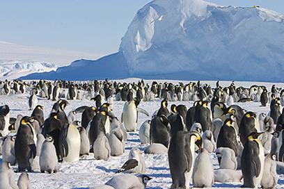 בטיסה או ברגל - אל תפסידו את הפינגווינים באנטארקטיקה (צילום: רון אוסלנדר) (צילום: רון אוסלנדר)