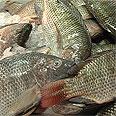 דגים - עשירים בחלבון