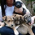 """חלק מהכלבים שיועמדו לאימוץ בהפנינג הקרוב באדיבות עמותת """"ראשון אוהבת חיות"""""""