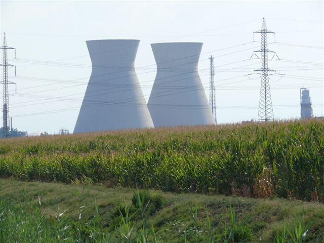 שדה תירס. גידולים חקלאיים לשוק האנרגיה מעוררים מחלוקת לגבי פגיעה בגידולי המזון (צילום: קרדיט: שירלי קיזל) (צילום: קרדיט: שירלי קיזל)
