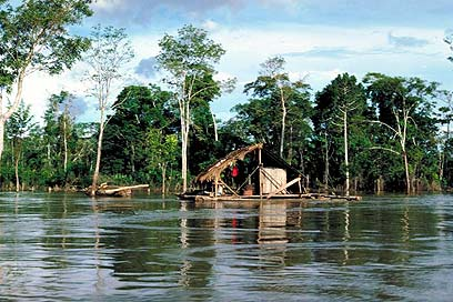 The Amazon rainforest (Archive photo: Jupiter)
