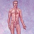 מבנה גוף גבר