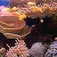 הים האדום. בגלל האלמוגים?