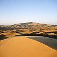 תוצא החממה , אנציקלופדיה ynet