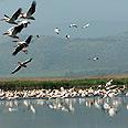 להקת עופות מתכנסת לשם הגנה