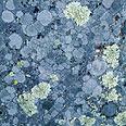 חזזיות (בהגדלה) על סלע