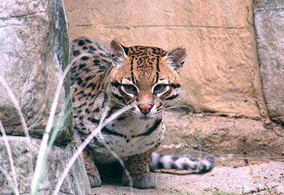 צילום: Kara Bussabarger, The Louisville Zoo