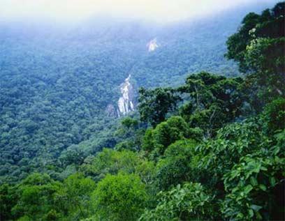 יערות הגשם באמזונס ()