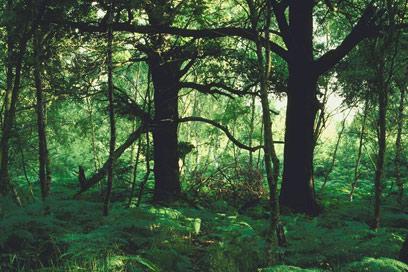 שם נולד החמין. יער (צילום: ויז'ואל/פוטוס) (צילום: ויז'ואל/פוטוס)