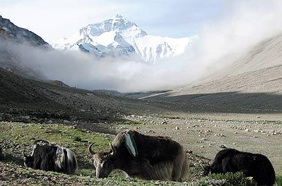 """האוורסט מהצד הטיבטי. מחלוקת בין סין לנפאל (צילום: איתי שביט """"עולם אחר"""") (צילום: איתי שביט"""