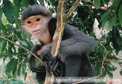 צילום: Tilo Nadler/Frankfurt Zoological Society