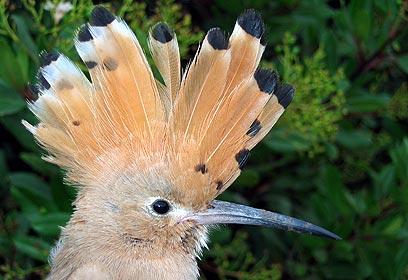 צילום: עמיר בלבן, החברה להגנת הטבע