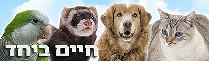 איך לגדל כלב, חתול, חמוס, שרקן, תוכי, איגואנה וארנבונים? מדריכים לחיים טובים ביחד
