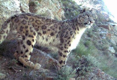 צילום: Wildlife Conservation Society