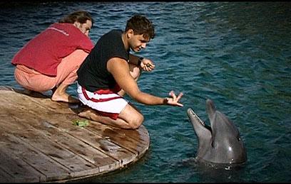 מוראד עזבה. חלק ממשפחת הדולפינים    ()