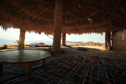 """חצי האי סיני. מסתובב שם """"שוקולד אריאל שרון"""" (צילום: צור שיזף) (צילום: צור שיזף)"""