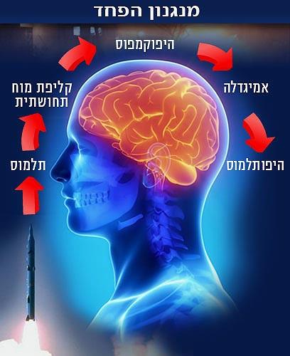 הפעלת נתיבי הפחד במוח (איור: ynet, shutterstock) (צילום: shutterstock) (צילום: shutterstock)