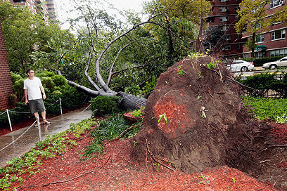 Trees fall down in New York (Photo: AFP)
