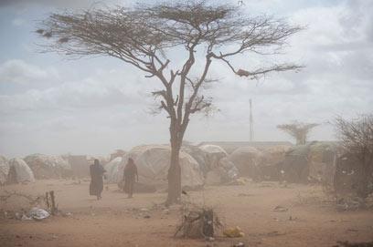 הרוב הגדול לא שב לביתו. מחנה אוהלים בקניה לפליטים סומלים (צילום: MCT) (צילום: MCT)
