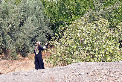 המטיילים הולכים בשבילי עצי הפרי. בוסתנים בעין יזרעאל (צילום: רונית סבירסקי) (צילום: רונית סבירסקי)
