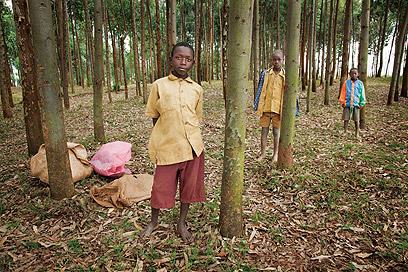 איסוף עצים לבישול וחימום הוא מטלה שילדים עושים כדי לעזור למשפחה (צילום: אודי גורן)