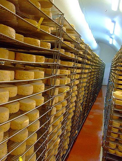 תנויילנו ותאכלו גבינות, הרבה גבינות (צילום: גיל אטלן) (צילום: גיל אטלן)