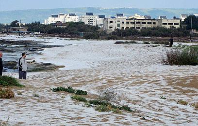 חוף שבי ציון הפך לבן (צילום: שי פליישר ) (צילום: שי פליישר )