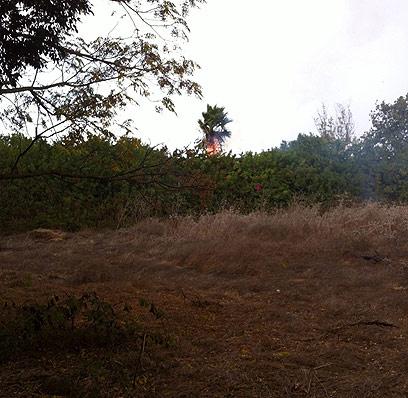 עץ שנפגע מברק בגבעת השלושה (צילום: קרן יחזקאל) (צילום: קרן יחזקאל)