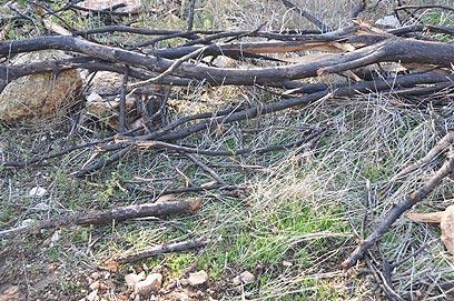 נחל בוסתן ליד ניר עציון (צילום: רונית סבירסקי) (צילום: רונית סבירסקי)