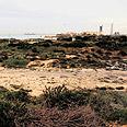 מבט משכונת עין הים לכיוון חוף הים. אין דרישה צילום: נמרוד גליקמן