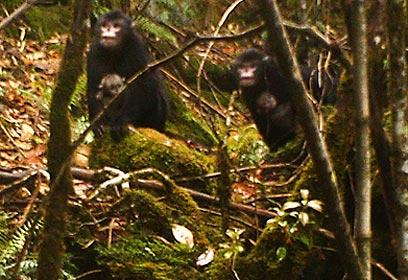צילום: Fauna & Flora International, BANCA and PRCF