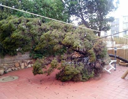 עץ שפשוט לא יכול לרוח של היום (צילום: אבישי לוי חברוני)