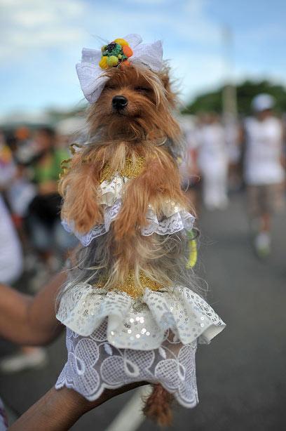 והנה יצור קטן במיוחד (צילום: AFP) (צילום: AFP)