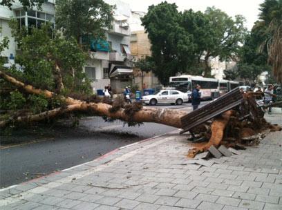 מרכז תל-אביב, רק בנס איש לא נפגע (צילום: אורי מרמורשטיין )