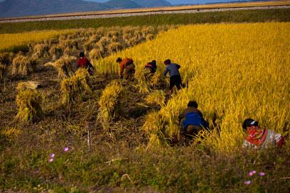 אסירים רבים עובדים בעבודות פרך, בכרייה ובחקלאות (צילום: AP) (צילום: AP)