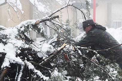 """עצים נפלו באל-רום. """"יש גם סכנות"""" (צילום: אביהו שפירא) (צילום: אביהו שפירא)"""