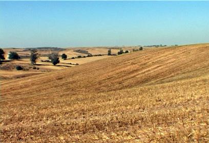 קרקע חקלאית. נסיקה מטאורית בשווי הקרקע (צילום: שי רוזנצוויג) (צילום: שי רוזנצוויג)