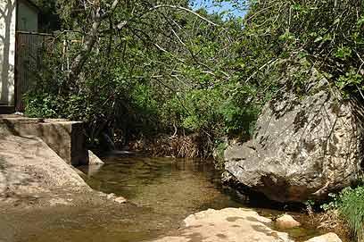 עצי פרי בנחל עמוד (צילום: לייזר ברגמן רשות שמורות הטבע) (צילום: לייזר ברגמן רשות שמורות הטבע)