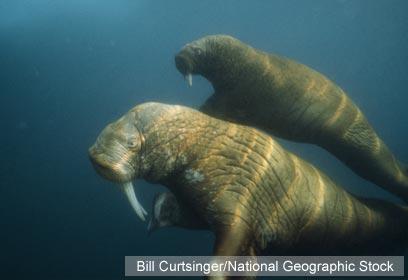 באדיבות WWF-Canada