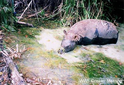 צילום: WWF Greater Mekong