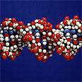 """דגם של מולקולת דנ""""א"""