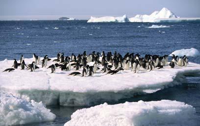 פינגווינים באנטרטיקה (צילום: ויז'ואל/פוטוס) (צילום: ויז'ואל/פוטוס)