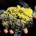 גבישי גופרית על סלע וולקני (הוואי)