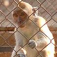 צילום: העמותה נגד ניסויים בבעלי חיים