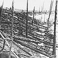 הרס וחורבן שהותיר אחריו, על פי ההשערה, רסיס שניתק משביט. טונגוסקה, סיביר, 1908