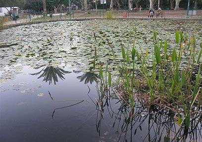גן מאיר (צילום: אלישבע זלצר) (צילום: אלישבע זלצר)